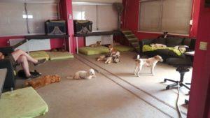 hunde im inneren spielbereich bei der hundebetreuung von dogs place in neuss