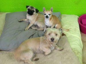 hunde liegen auf grossen sitzkissen bei dogs place in koeln