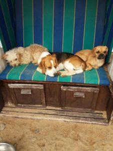 hunde liegen im strandkorb und geniessen die frische luft bei der hundebetreuung dogs place