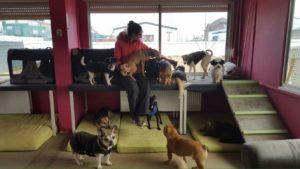 hundebetreuerin von dogs place in neuss umgeben von vielen hunden
