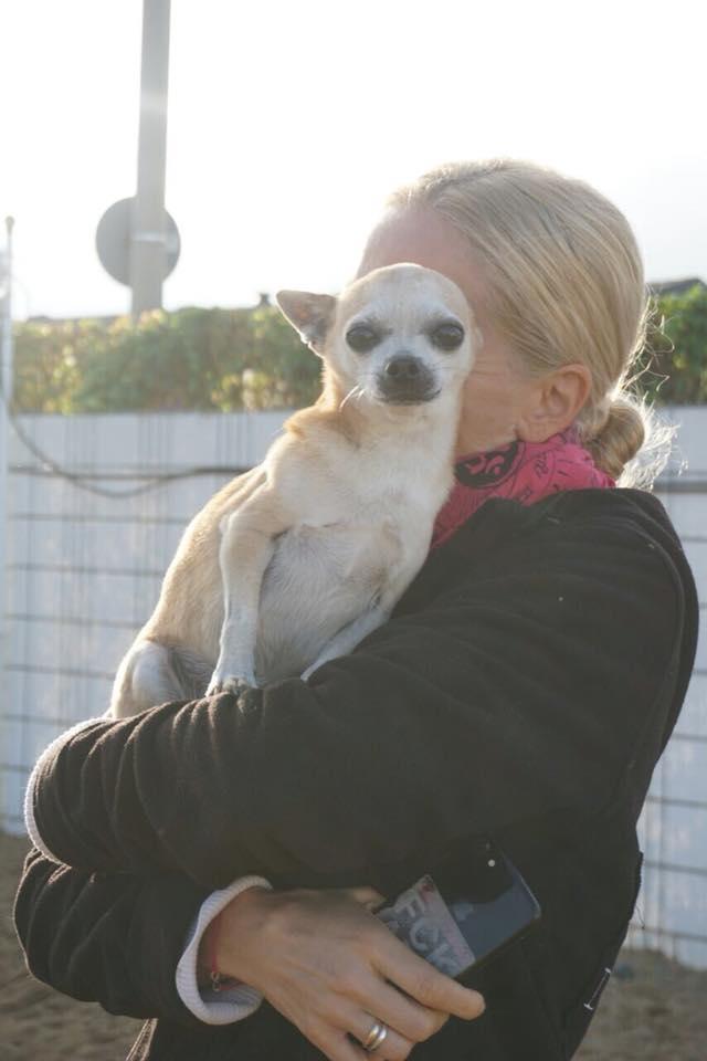 jannine gorju inhaberin von dogs place umarmt einen kleinen chihuahua