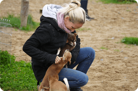 kleine hunde holen sich eine streicheleinheit bei einer mitarbeiterin von dogs place