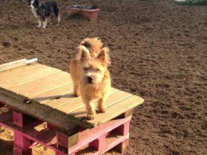 kleiner hund auf holzpalette auf dem gelaende von dogs place in neuss