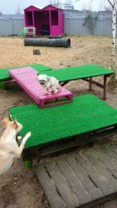 kleiner hund auf pinker holzpalette bei dogs place in koeln