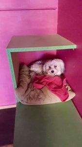 kleiner hund hat es sich auf einem kissen in einer spielecke gemuetlich gemacht
