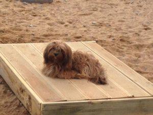 kleiner hund liegt im freien auf einer holzpalette auf dem gelaende von dogs place