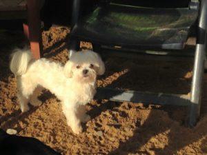 kleiner hund schaut neugierig bei dogs place in koeln