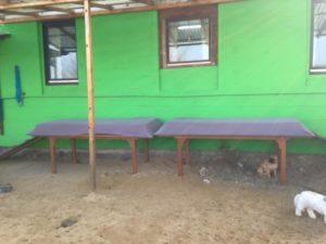 kleiner hund sitzt unter einer holzbank bei dogs place in koeln