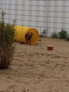 kleiner hunde kommt aus gelbem spieltunnel hervor