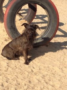 kleiner schwarzer hund schaut verwundert in die gegend bei dogs place in koeln
