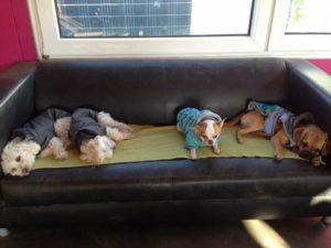 mehrere hunde beim mittagsschlaf auf einer couch bei der hundebetreuung von dogs place