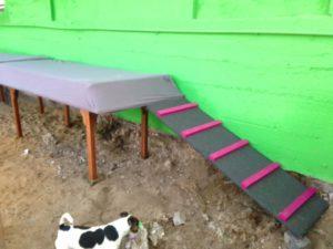rampe aus holz zum spielen fuer hunde bei dogs place in koeln