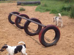 reifen zum spielen bei der hundebetreuung dogs place in koeln