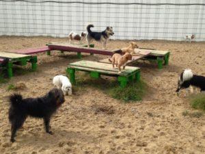 viele hunde beim spielen auf dem gelaende von dogs place in neuss