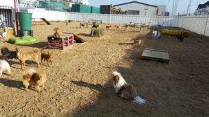 viele hunde im freien auf dem gelaende von dogs place in neuss
