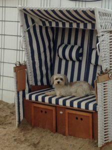 weisser hund liegt in einem strandstuhl bei der hundebetreuung dogs place